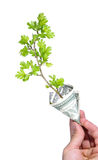 Business growing. Hand holding green plant growing in money, dollar banknote Royalty Free Stock Photos