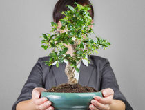 Business growth like bonsai tree Royalty Free Stock Image
