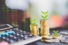 Business growth with tree growing on coins over stock market data screen. Successful and investment concept background royalty free stock photography