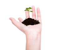 Business hand holding green small plant Royalty Free Stock Image