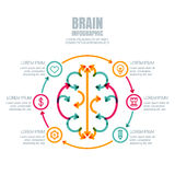 Business infographics vector template. Brain made from colorful arrows, outline icons set. High technology, development and creativity concept. Creative stock illustration