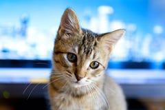 Business Kitty Stock Photos