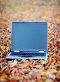 Business laptop. A laptop sits in the middle of a leafy field Stock Images