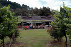 Business Lunch. People having lunch in vineyard royalty free stock images