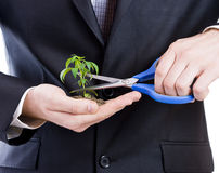 Business  man cutting a plant Royalty Free Stock Photos