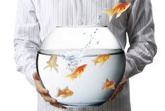 Business man flying goldfishes from Royalty Free Stock Image