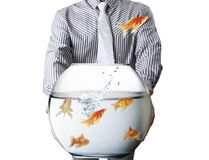 Business man and flying goldfishes Royalty Free Stock Photography