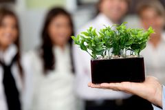 Business man holding a plant Royalty Free Stock Photos