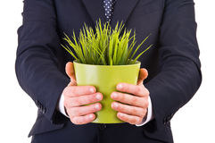 Businessman holding potted plant. Royalty Free Stock Image