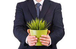 Businessman holding potted plant. Royalty Free Stock Photography