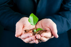 Business man holding seedling in his hands Stock Image