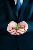 Business man holding seedling in his hands Royalty Free Stock Images