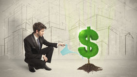 Business man poring water on dollar tree sign on city background Stock Photography