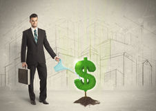 Business man poring water on dollar tree sign on city background Royalty Free Stock Images
