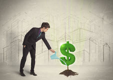 Business man poring water on dollar tree sign on city background Stock Image