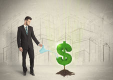 Business man poring water on dollar tree sign on city background Royalty Free Stock Image