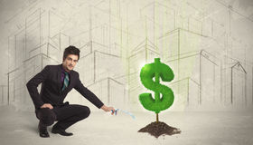 Business man poring water on dollar tree sign on city background Stock Images
