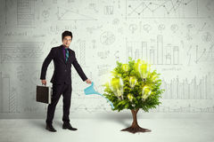 Business man pouring water on lightbulb growing tree Stock Photos