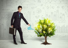 Business man pouring water on lightbulb growing tree Stock Images