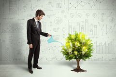 Business man pouring water on lightbulb growing tree. Concept Stock Photography