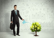 Business man pouring water on lightbulb growing tree Royalty Free Stock Image