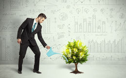 Business man pouring water on lightbulb growing tree Royalty Free Stock Photos