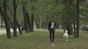 Business man quietly walks with big white dog in the park royalty free stock image