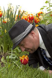 Business man smells tulips. Business man laying on the ground in the grass wearing a suit and hat, smelling the red and yellow tulip, down to nature. with rich stock photos