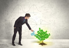 Business man watering a growing green dollar sign tree Royalty Free Stock Photography
