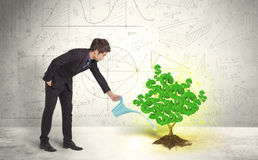 Business man watering a growing green dollar sign tree Stock Image