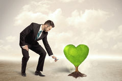 Business man watering heart shaped green tree Royalty Free Stock Images
