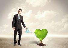 Business man watering heart shaped green tree Stock Photography