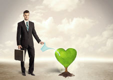 Business man watering heart shaped green tree Stock Image