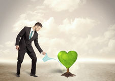 Business man watering heart shaped green tree Royalty Free Stock Photo