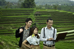 Three young employees meeting in the rice field la Stock Images