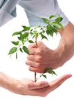 Business men, hand a plant Royalty Free Stock Photography