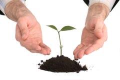Business men hands  a plant Stock Image