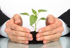 Business men hands  a plant Royalty Free Stock Photos