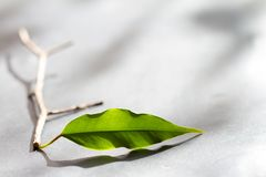 Business metaphor team start up concept with leaves Royalty Free Stock Images