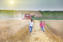 Business partners on wheat field Royalty Free Stock Photos