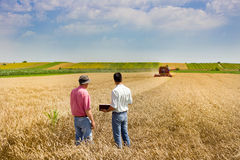 Business people on wheat field Royalty Free Stock Photos