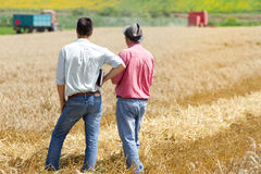 Business people on wheat field Royalty Free Stock Image