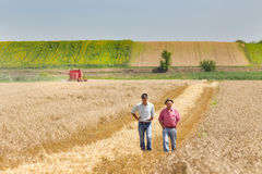 Business people on wheat field Royalty Free Stock Photo