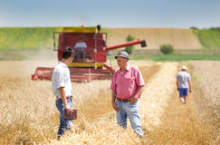 Business people on wheat field Stock Photography