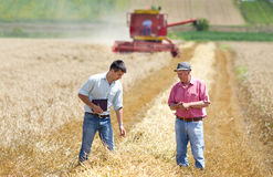 Business people on wheat field Royalty Free Stock Images