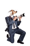 Business photographer with head of goat. And with two photo cameras sitting on his knee at white background Stock Photography