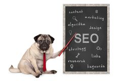 Business pug dog holding red pointer, pointing out search engine optimization, SEO performance strategy, hand drawn on chalkboard. Business pug dog holding red stock photos