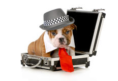 Business puppy Stock Photo