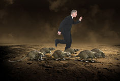 Business Rat Race, Career, Stress Royalty Free Stock Photo
