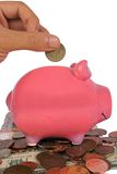 Business savings in a piggy bank Stock Photo
